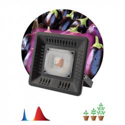 купить пермь Прожектор светодиодный ЭРА FITO-50W-LED BLUERED